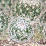 Un negocio para iniciar en casa, la venta de cactus, muy facil de empezar como jugando