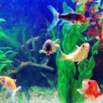 Ideas de negocios rentables: Servicio de Mantenimiento del acuario